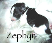 See Zephyr's page