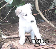 See Argus' page